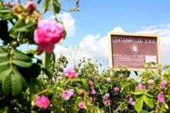 遇见玫瑰遇见爱 探秘保加利亚玫瑰谷