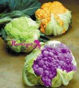 让低卡花椰菜成为你健康瘦身的好帮手
